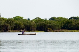 Brazil - Pantanal Wildlife - 1