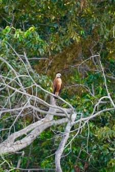 Brazil - Pantanal Wildlife - 14
