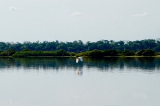 Brazil - Pantanal Wildlife - 2