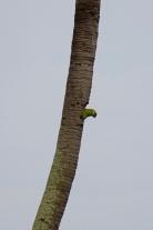 Brazil - Pantanal Wildlife - 54