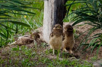 Brazil - Pantanal Wildlife - 58