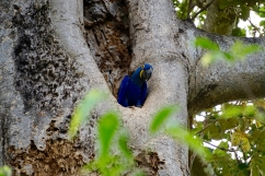 Brazil - Pantanal Wildlife - 61