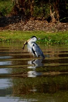 Brazil - Pantanal Wildlife - 66