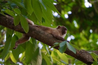Brazil - Pantanal Wildlife - 69