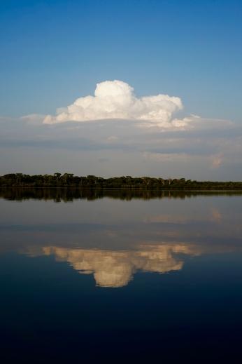 Brazil - Pantanal Wildlife - 71